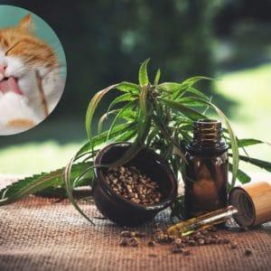 CBD ulje za životinje: Koje bolesti liječi i kako se točno primjenjuje?