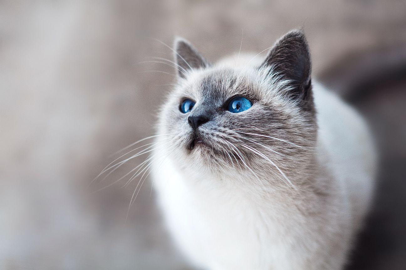 cbd ulje za mačke