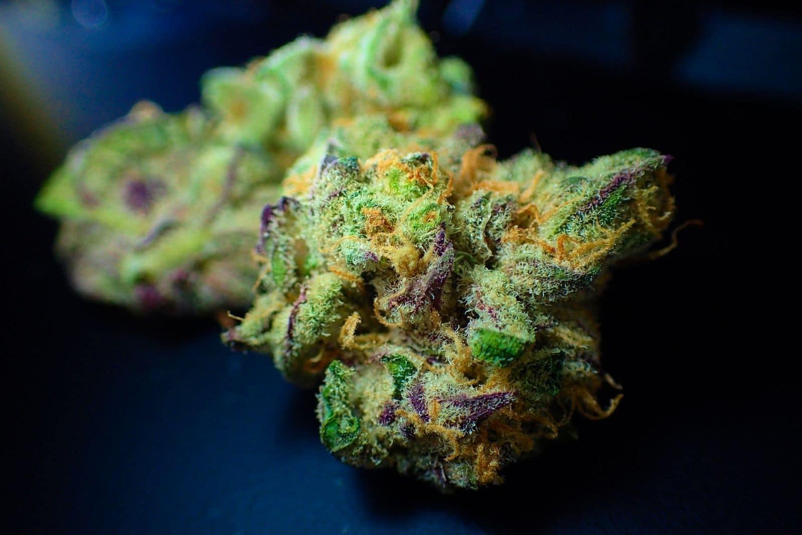vrste marihuane