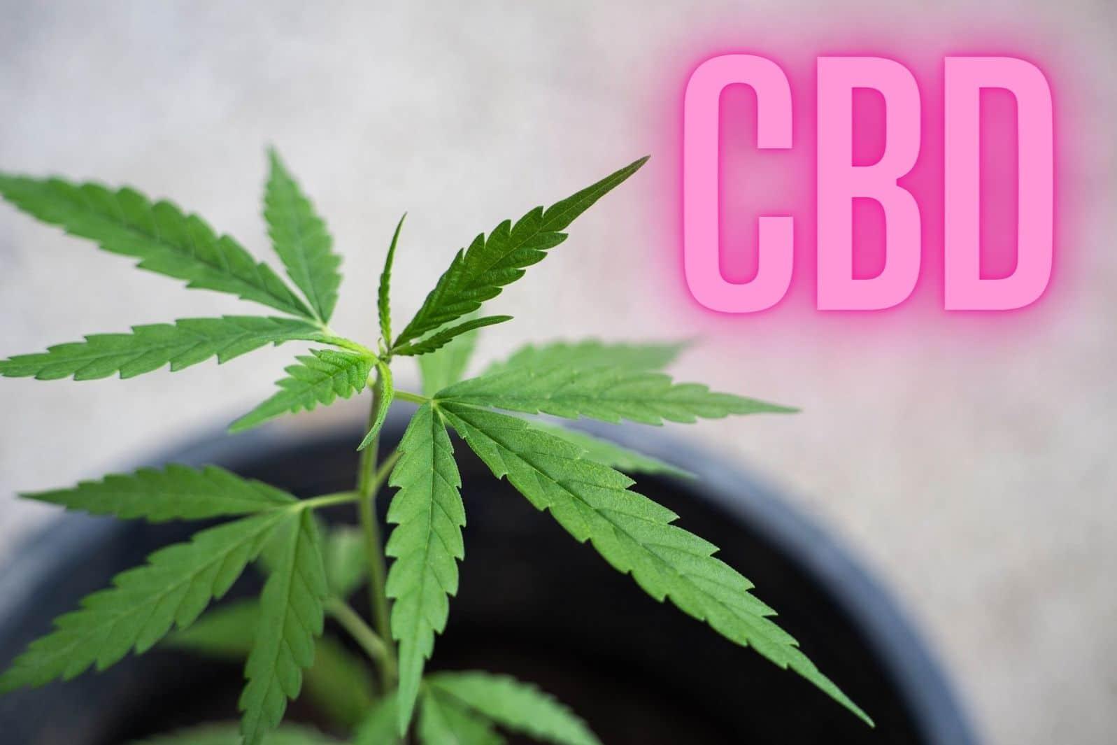 što je CBD